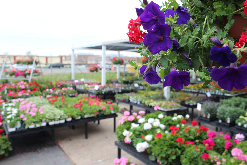 chantilly garden center annuals