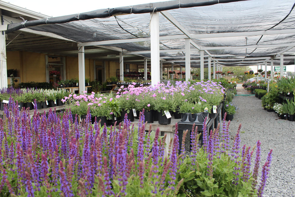 perennials chantilly garden center