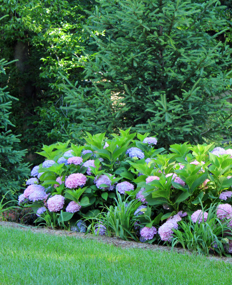 Chantilly-planting-contractor