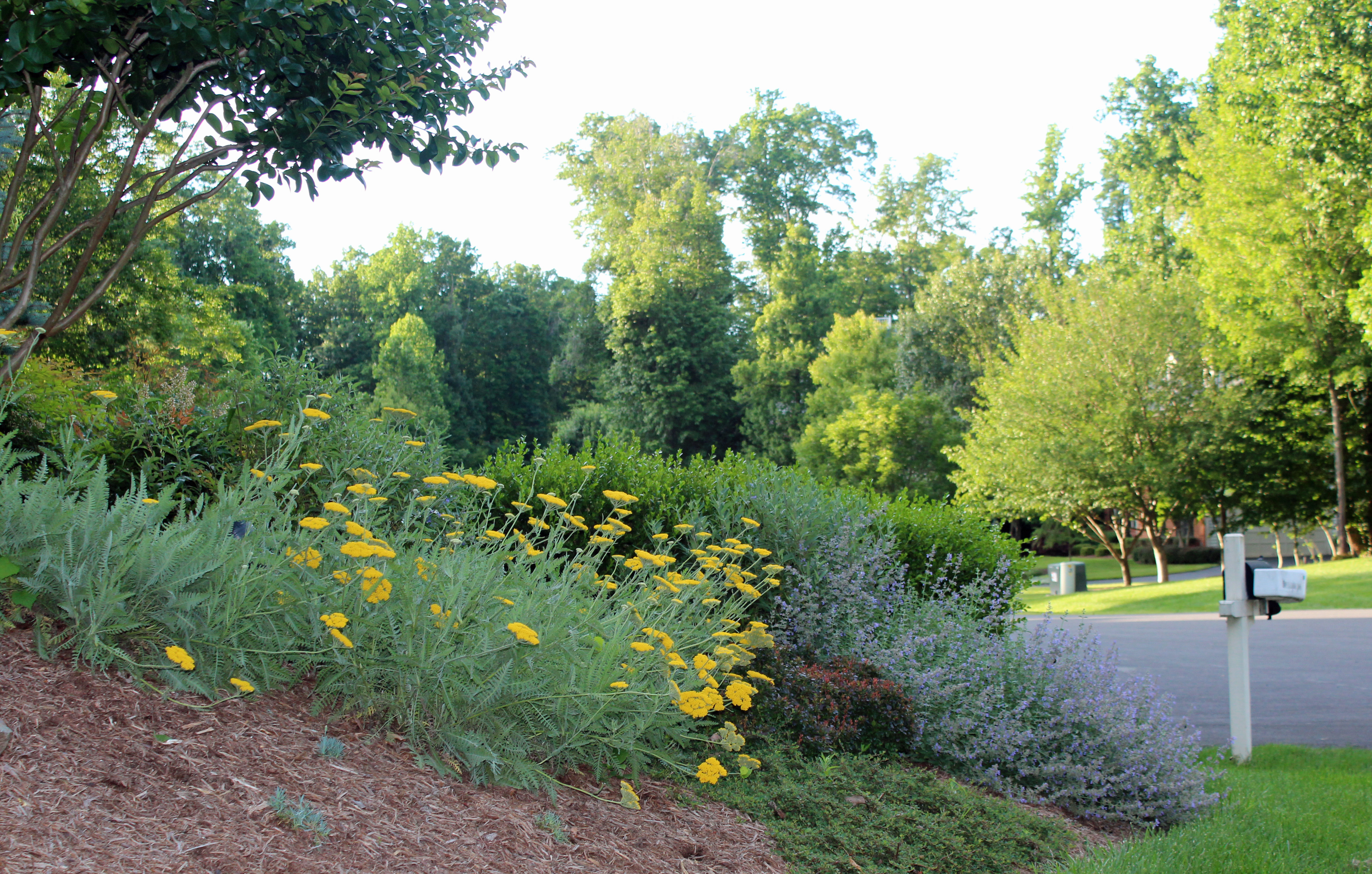 chantilly perennial garden design