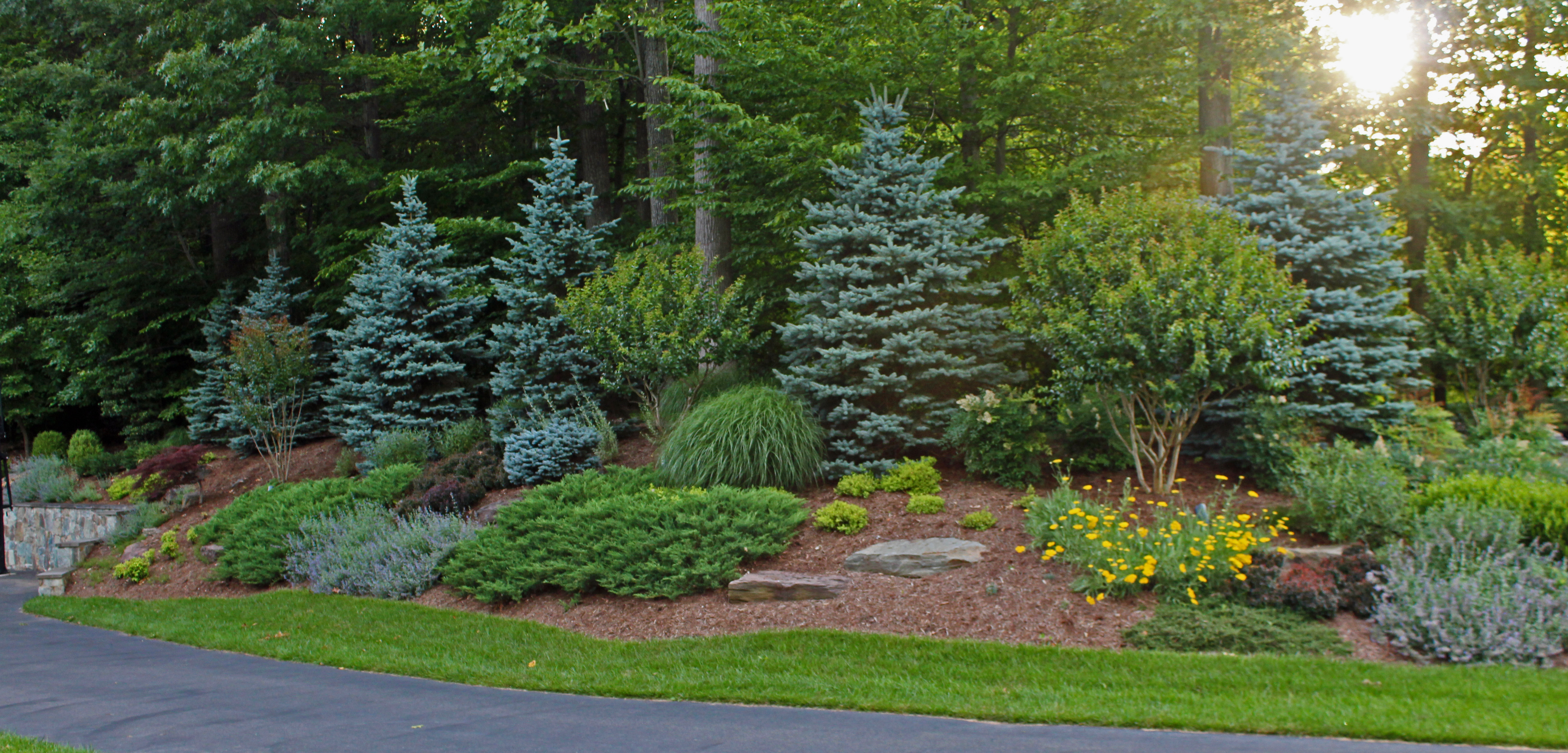 chantilly evergreen planting design